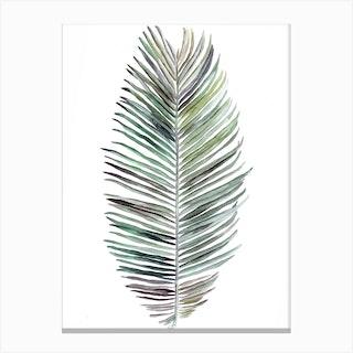 Botanical Illustration   Cocos Nucifera Canvas Print