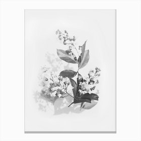 Flowers Bouquet Black And White Canvas Print