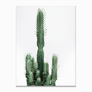 Cactus Red II Canvas Print