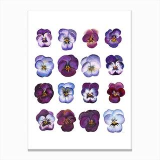 A Study Of Violas Canvas Print