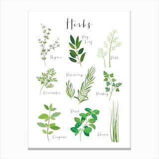 Herbs Canvas Print