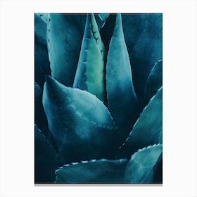 Cactus No.4 Canvas Print