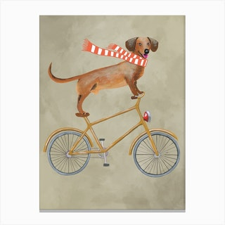 Dachshund On Bicycle With Sjawl Canvas Print