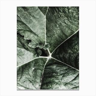 Close Up Leaf Canvas Print