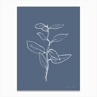 Eucalyptus Sapling Canvas Print