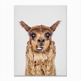 Happy Llama Canvas Print