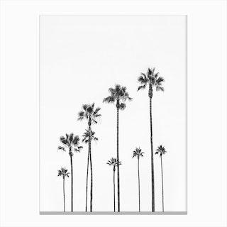 Black Palm Trees Canvas Print