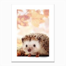 Hedgehog Canvas Print