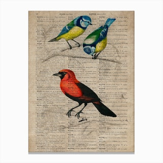 Great Tit And Scarlet Tanagerhumming Bird Dictionnaire Universel Dhistoire Naturelle Canvas Print