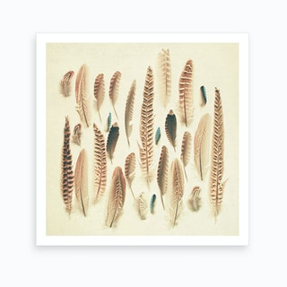 Found Feathers Print