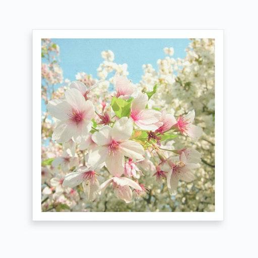 Spring Blossom Print
