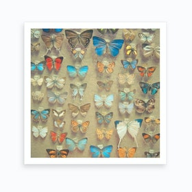The Butterfly Collection Art Print