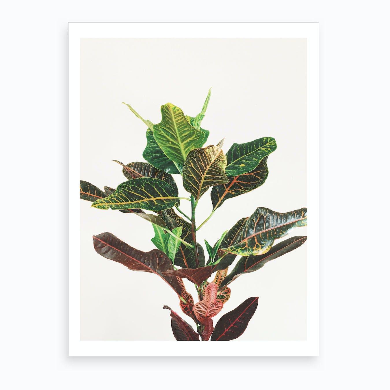 Croton Print