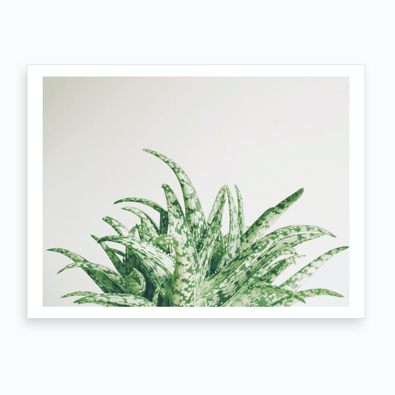 Aloe Spider Print
