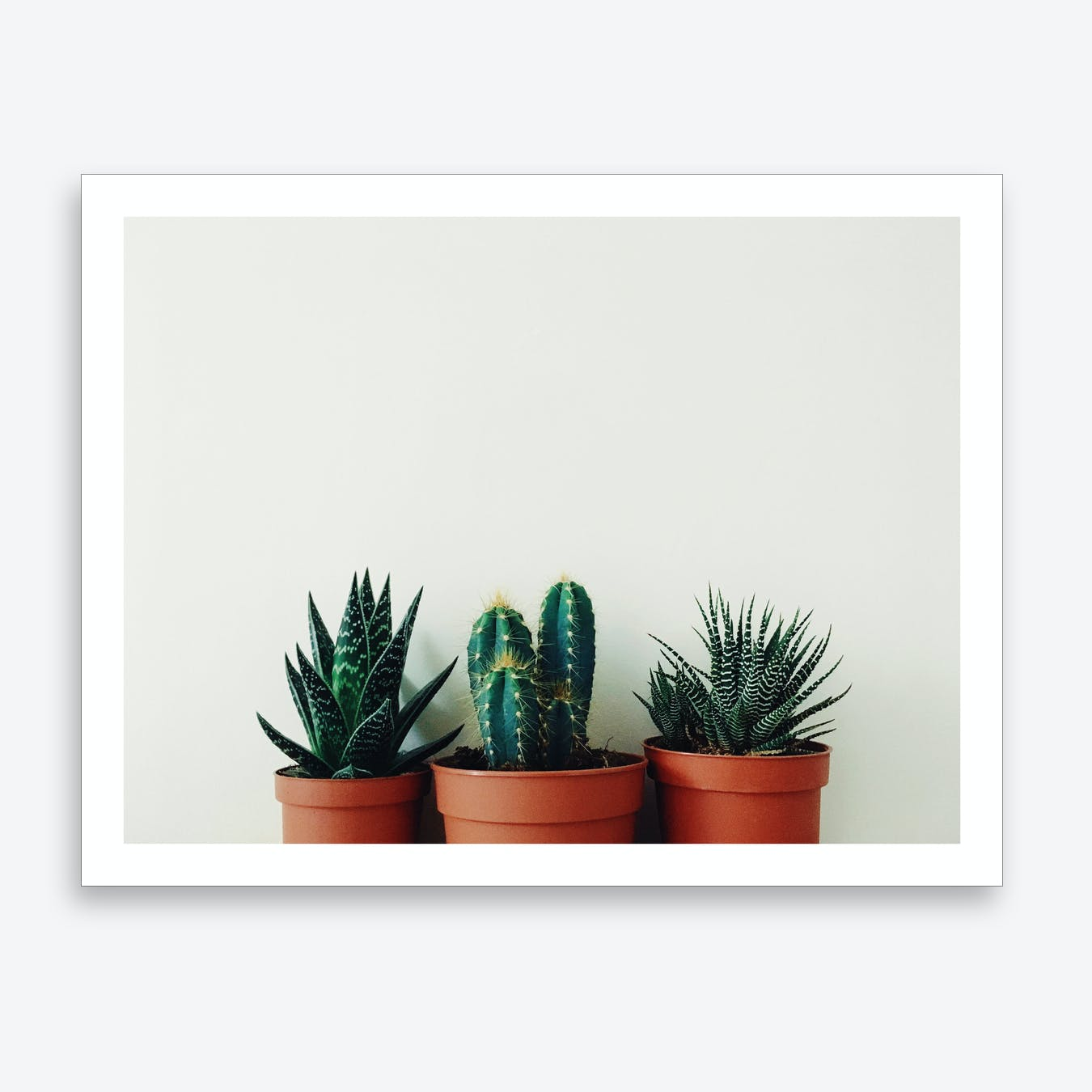 Potted Plants Print