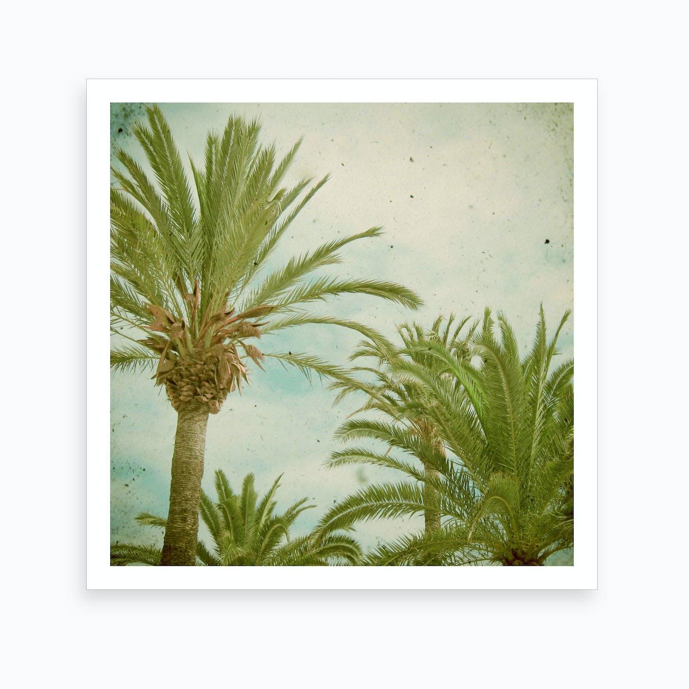 Palm Trees Print I