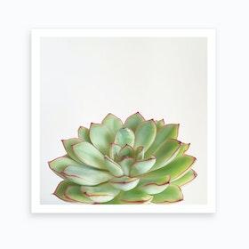 Green Succulent Print