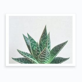 Aloe Tiki Print