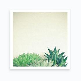 Succulent Forest Print
