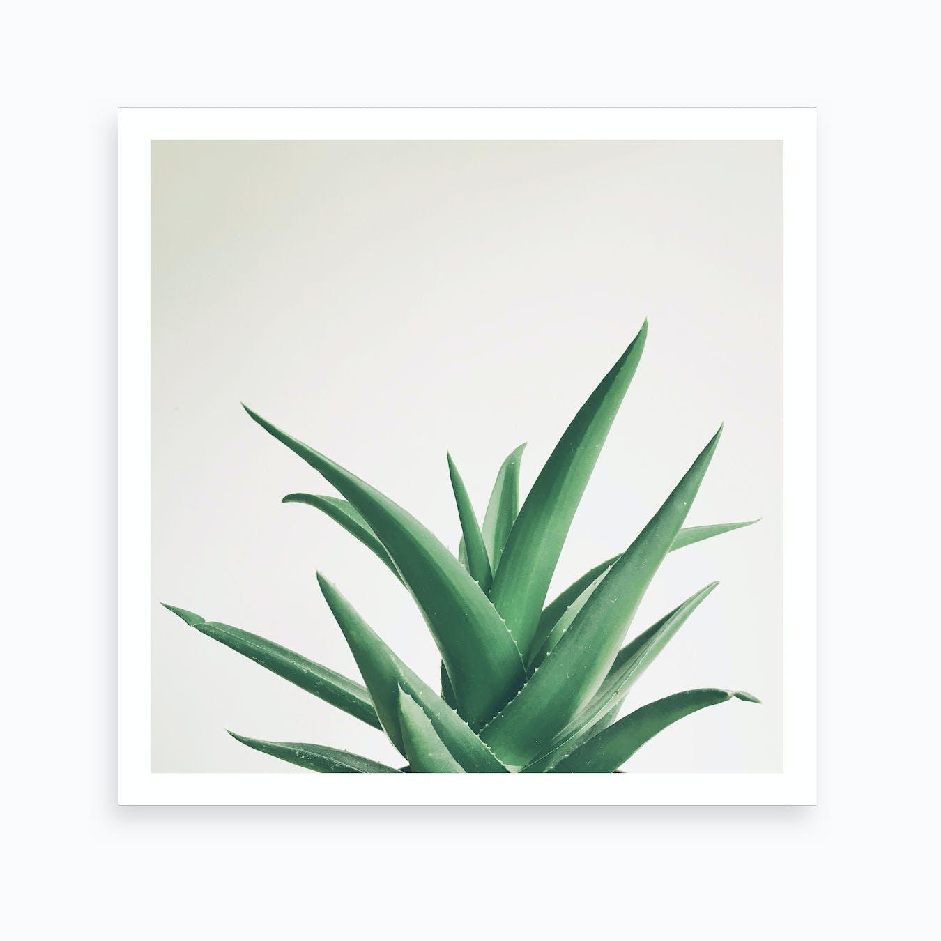 Leaves Print