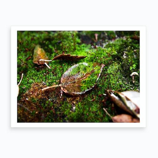 Wet Leaf Art Print