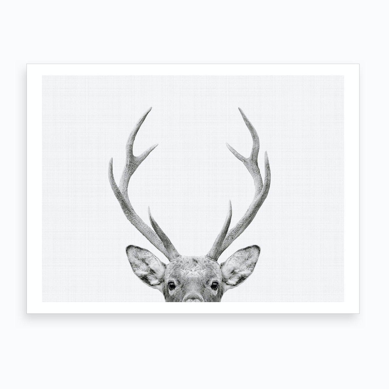 Deer BW I Art Print