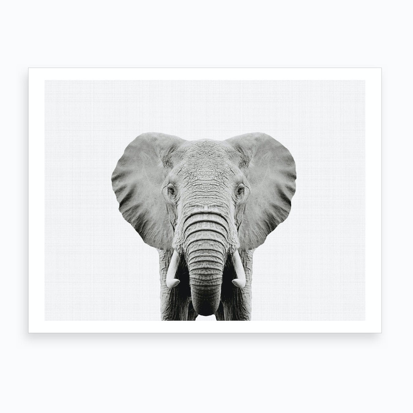 Elephant BW I Art Print
