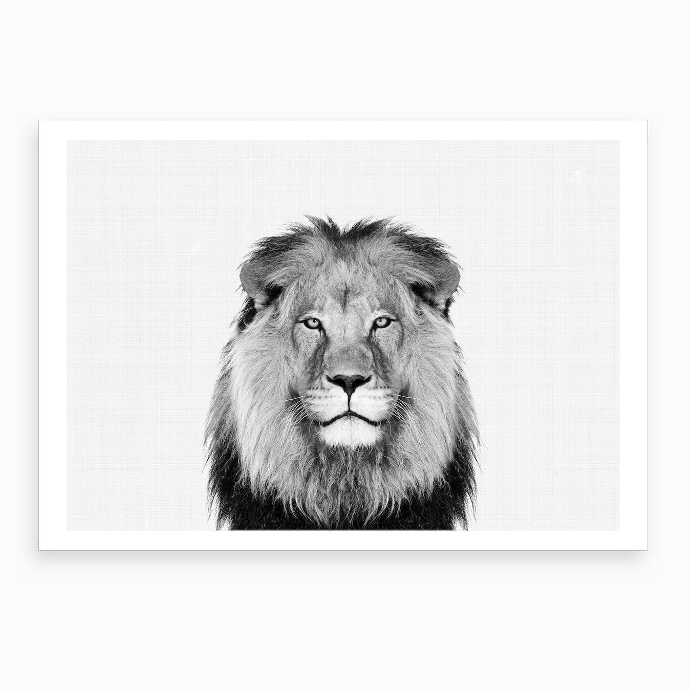 Lion BW II Art Print
