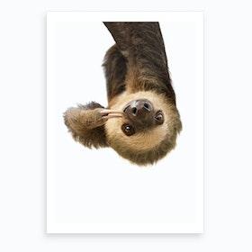 Sloth X Art Print