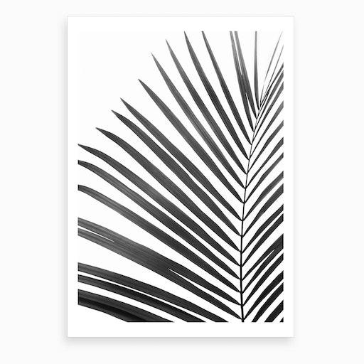 Palm Leaf Black Art Print