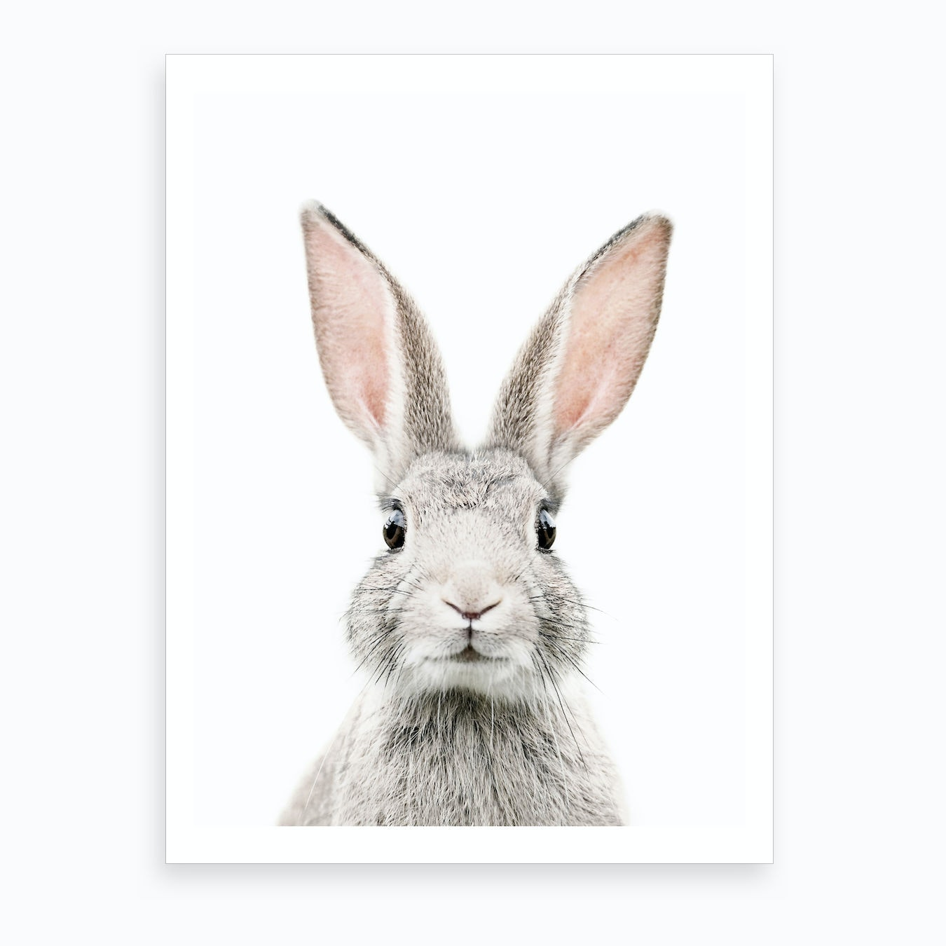 It's just a photo of Bewitching Rabbit Pictures to Print