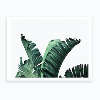 Banana Leaf Art Print