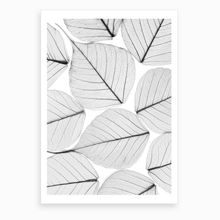 Skeleton Leaf II Art Print