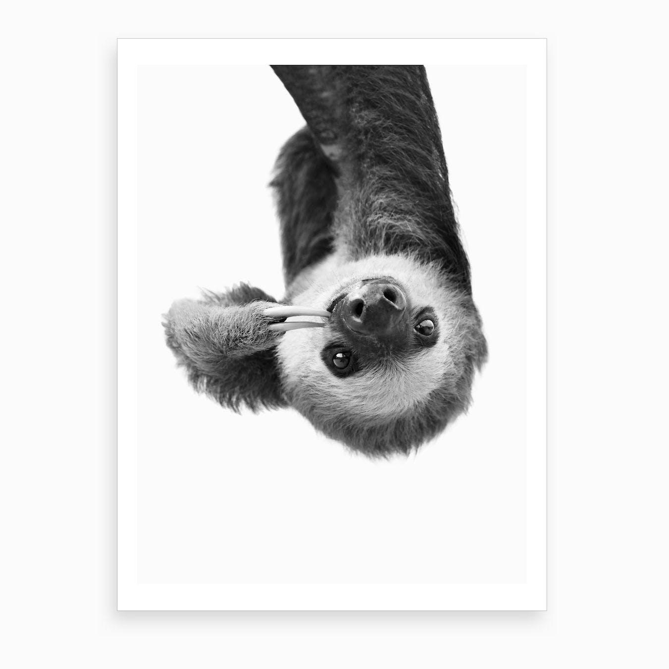 Sloth BW Art Print