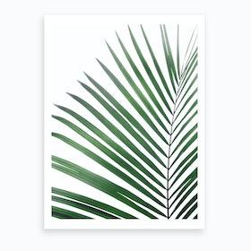 Palm Leaf Green Art Print