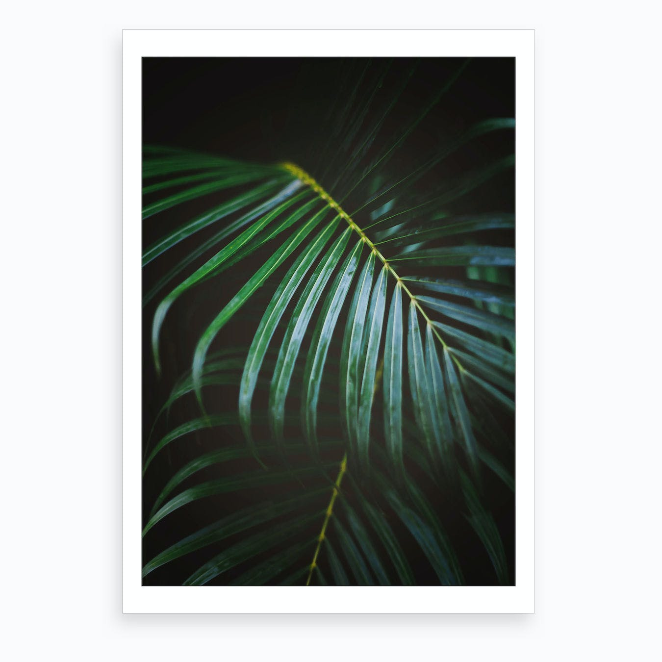 Emerald Leaf Art Print