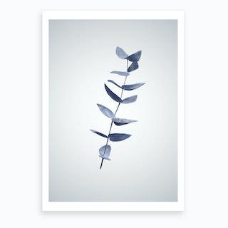 Eucalyptus III Art Print