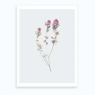 Cardoon I Art Print