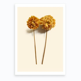 Yellow Dahlia I Art Print