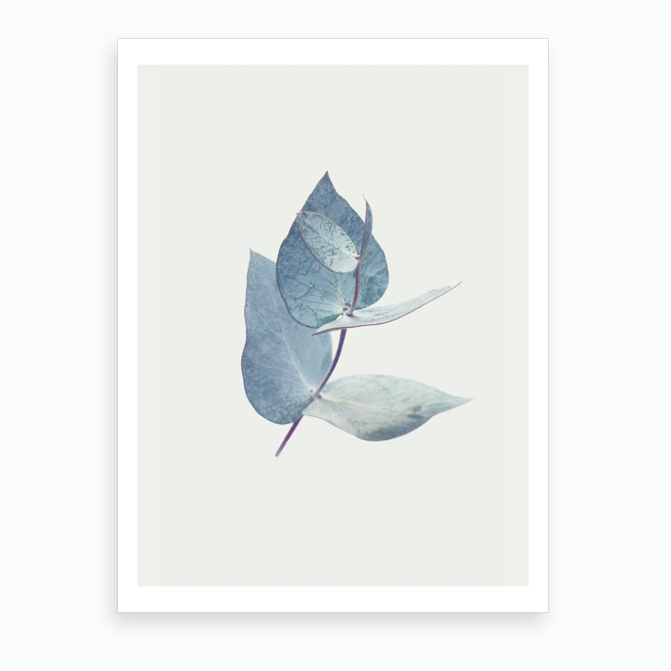 Eucalyptus I Art Print