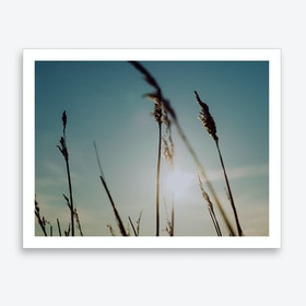 Reeds on the Beach 5 Art Print