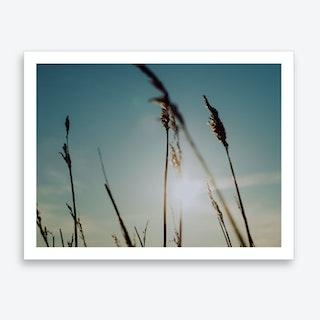 Reeds on the Beach 5 Art Print