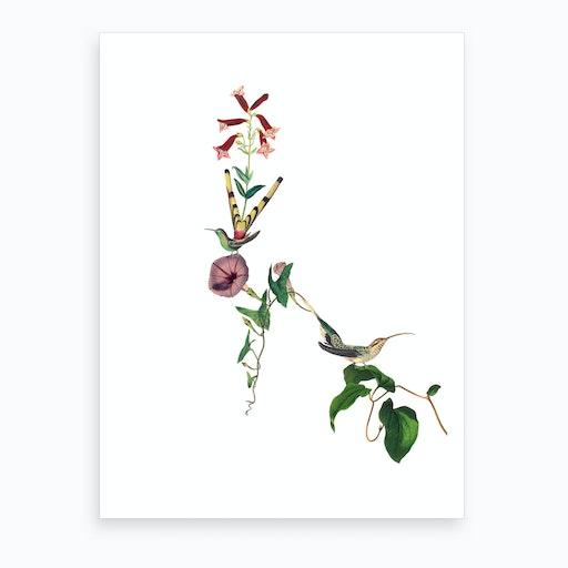 Hummingbirds of Paradise Art Print