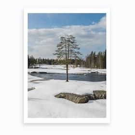 Split Pine Art Print