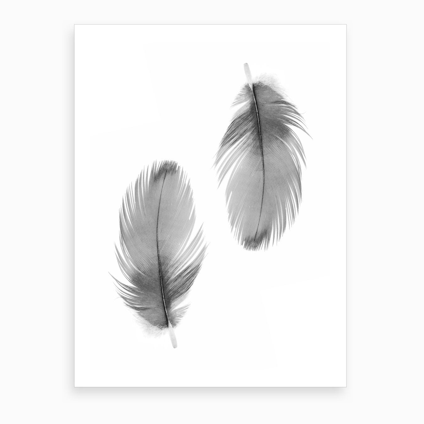 Double Feathers Art Print