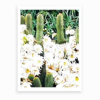 Cactus And Bloom Art Print