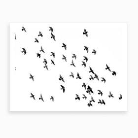 Birds Monochrome Art Print