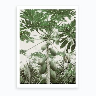 Jungle IV Art Print
