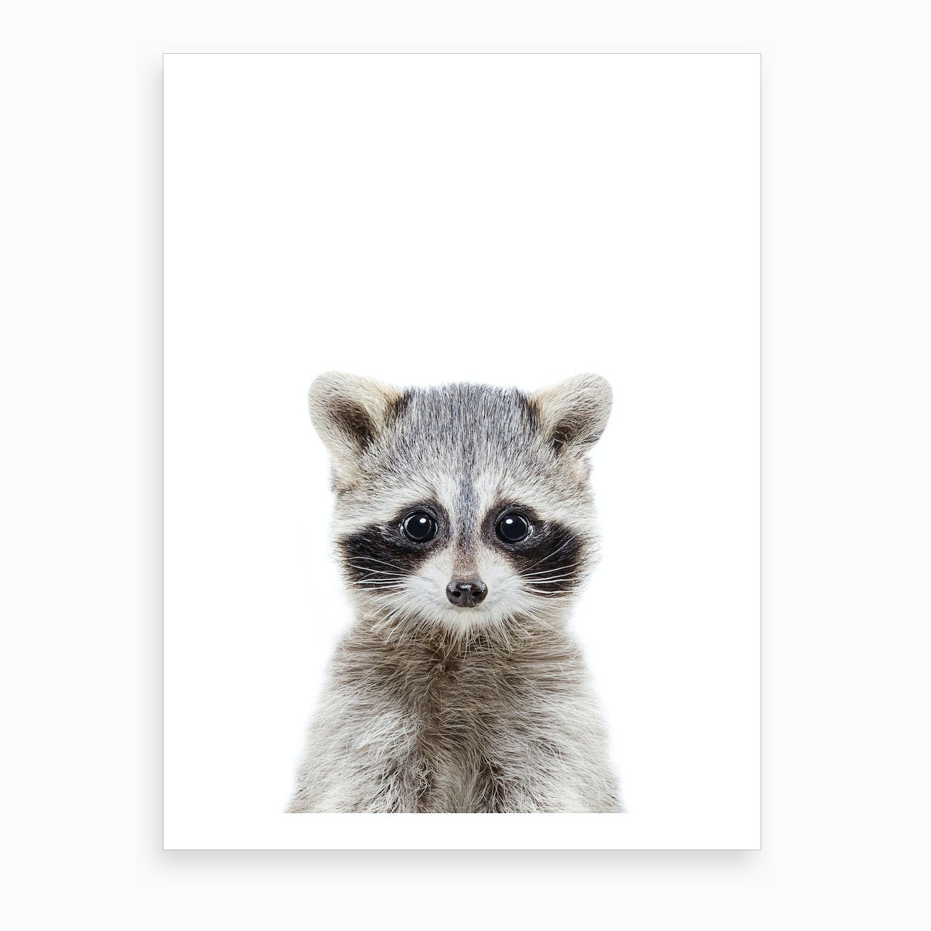 Racoon Art Print By Sisi And Seb Fy