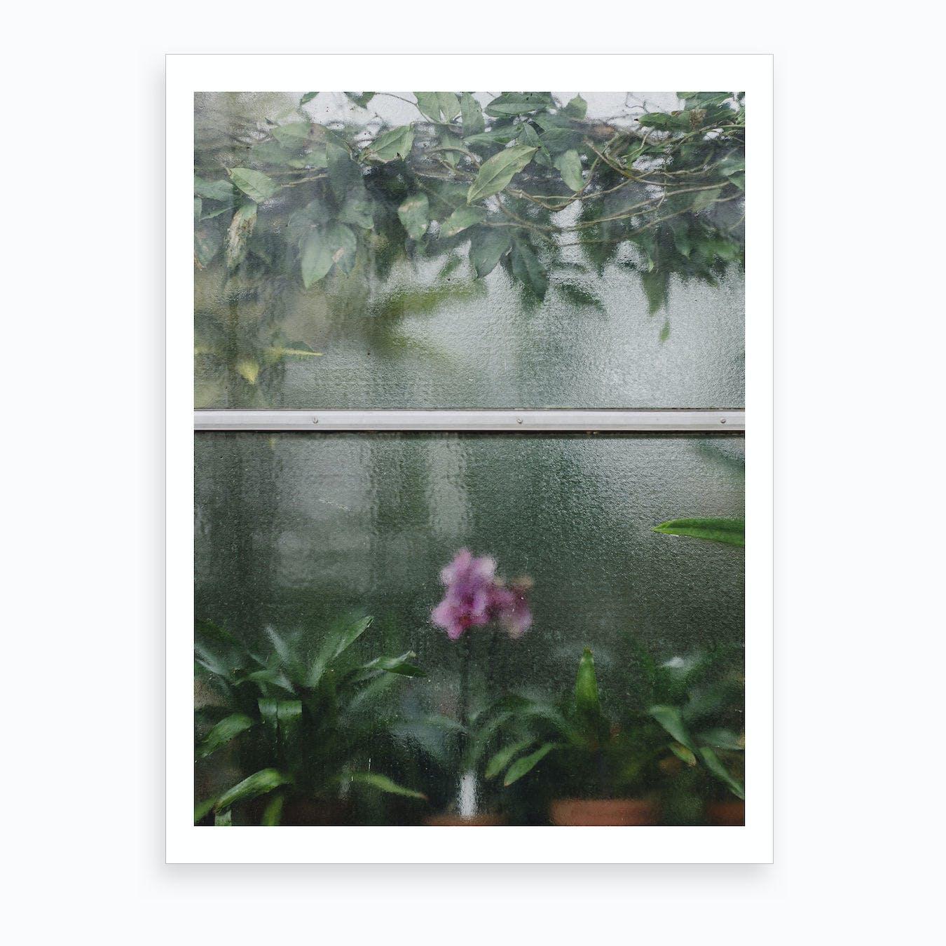 Window Orchid Art Print